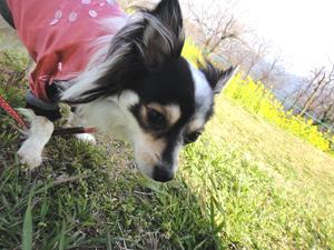 愛犬モコの留守番カメラ見守り隊