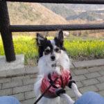 【犬連れ】マザー牧場で年間パスポート(2年間)を取得!