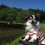 茂原市 ひめはるの里 バラ鑑賞とドッグラン 【犬とお出かけ】