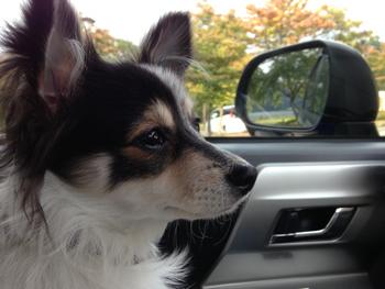 犬連れ ドライブ