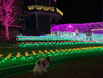 土浦 イルミネーション 犬連れ・ペット同伴