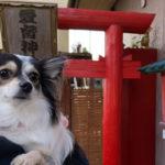 千葉県 ペット専用神社 愛育神社(めぐしじんじゃ) 犬連れ 初詣