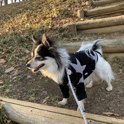 犬連れ プチ登山 三ツ石森林公園