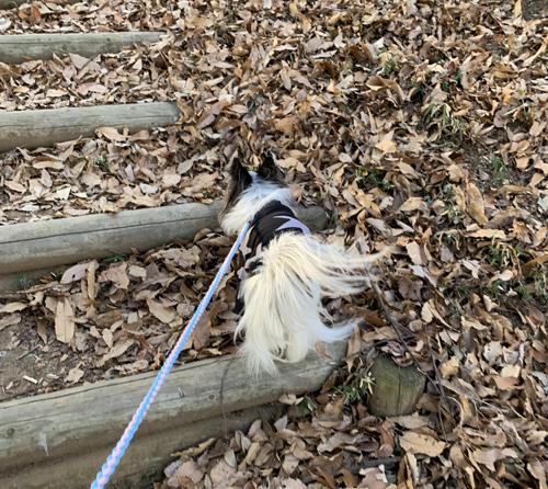 三ツ石森林公園 犬連れ