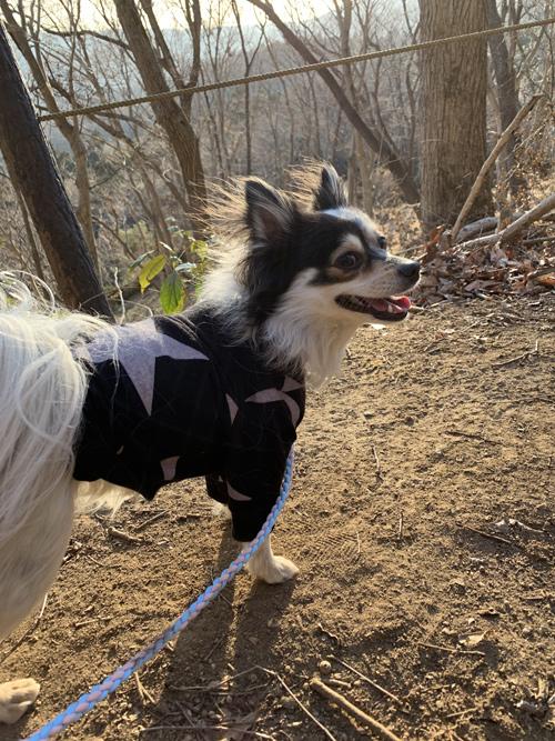 犬連れ プチ登山