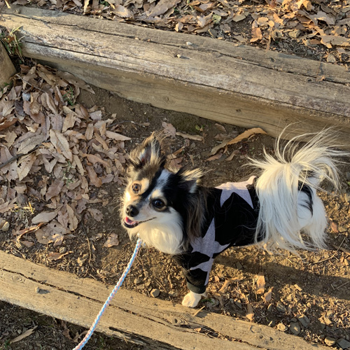 三ツ石森林公園 犬連れ プチ登山