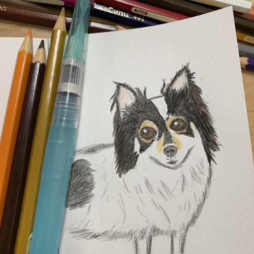 水彩色鉛筆 使い方 犬 イラスト 水彩画