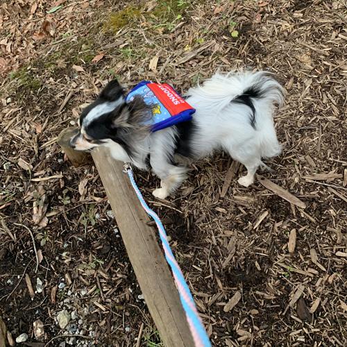 グリーンポート エコ・アグリパーク 犬と散歩
