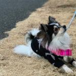 【犬と散歩】手賀沼自然ふれあい緑道 道の駅しょうなん