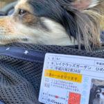 なめ猫の免許証じゃないよ!JAFのイベントで愛犬免許証取得