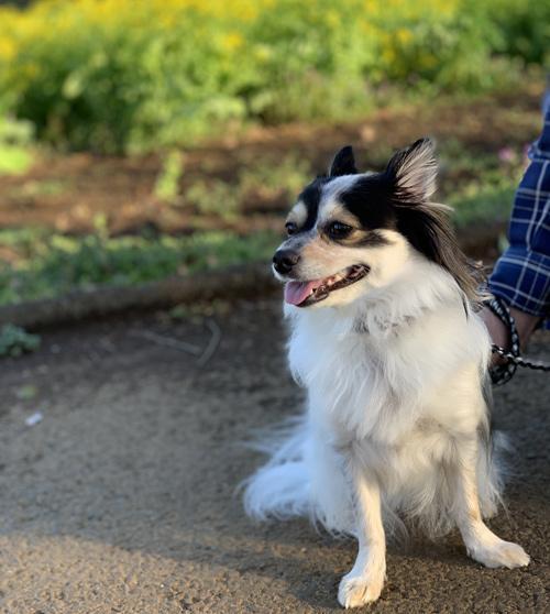 さんぶの森公園 犬の散歩