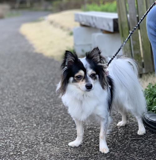 山武市 犬 散歩