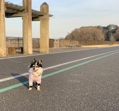 手賀沼 犬 散歩