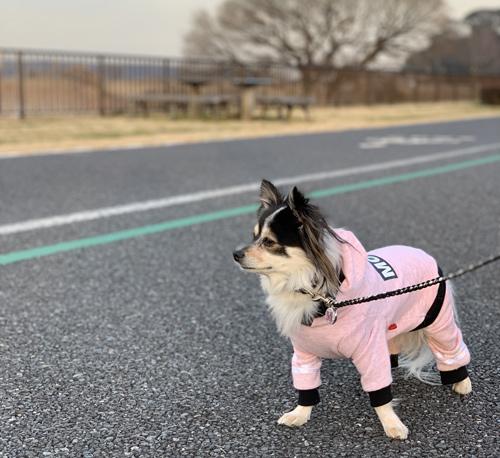 手賀沼 ウォーキングコース 犬