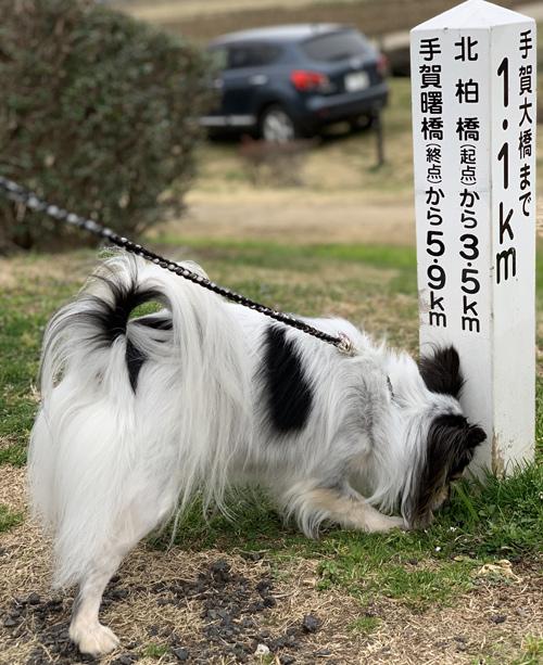 犬 匂い嗅ぎ