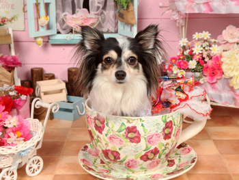 犬の撮影会と犬用 誕生日ケーキ