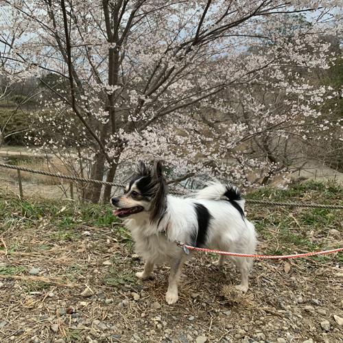 成田 さくらの山 散策道