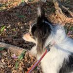 カタクリの開花状況確認へマイナー登山ルートで登る筑波山 【犬連れ登山】