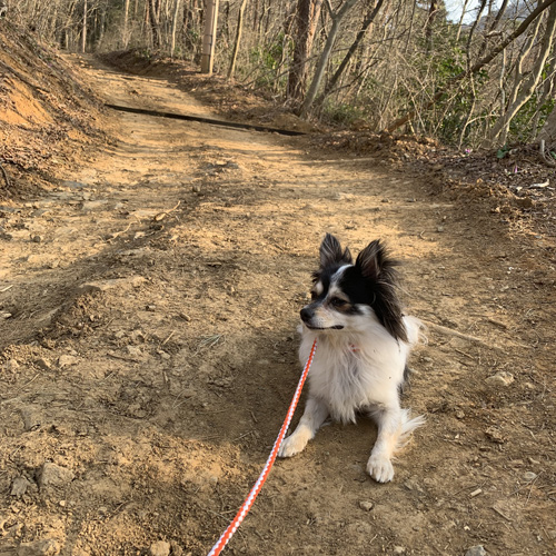 筑波山 犬連れ登山