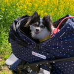 エアバギー 犬 ドーム2 ビームス コラボ メリット・デメリット