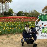 【犬とお出かけ 茨城】 和田公園 2019稲敷チューリップまつり 稲敷市浮島