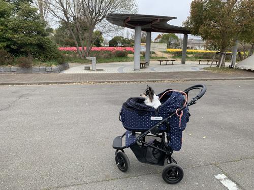 和田公園 稲敷 チューリップ畑 犬連れ