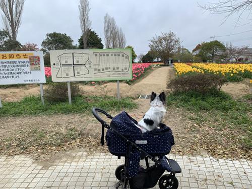 稲敷市 和田公園 チューリップ畑 入口