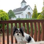 「南房総 道の駅ローズマリー公園」は犬と散歩できるお気に入りの場所