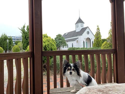 南房総市 道の駅ローズマリー公園 犬とお出かけ