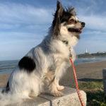 銚子市「犬吠埼灯台」君ヶ浜しおさい公園 犬連れ散歩