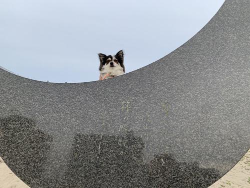 月の砂漠、犬連れ