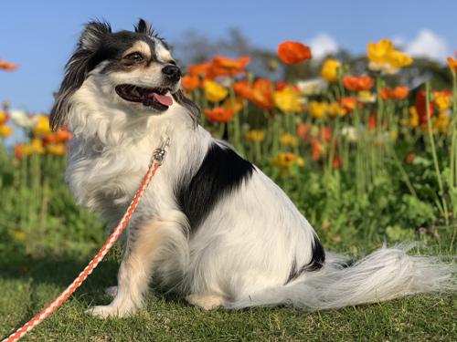 三陽メディアフラワーミュージアム(千葉市花の美術館) 犬