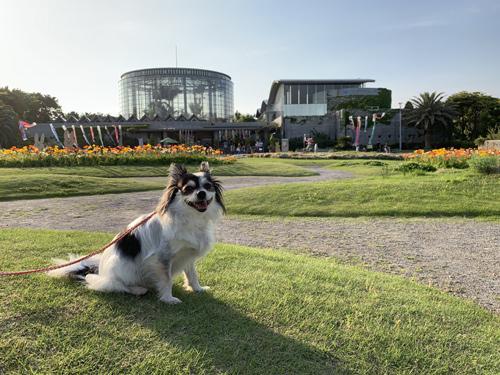 三陽メディアフラワーミュージアム 犬連れ