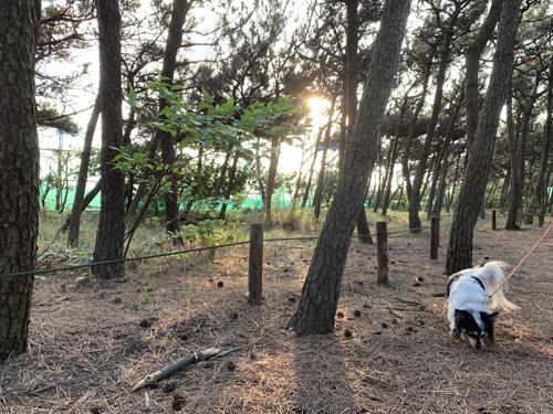 磯の松原を散策