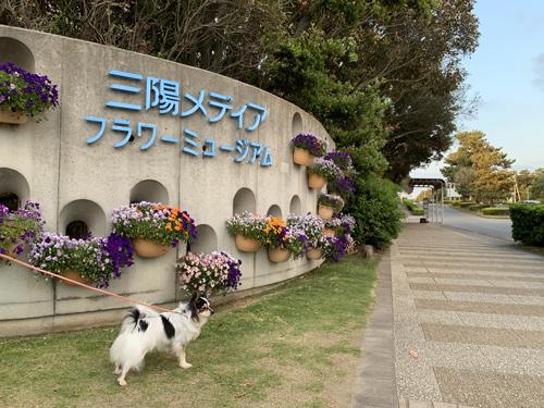 三陽メディアフラワーミュージアム(千葉市花の美術館)を愛犬と散歩