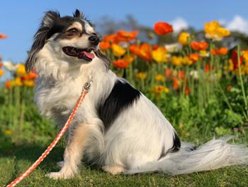 稲毛海浜公園と三陽メディアフラワーミュージアムへ犬連れ
