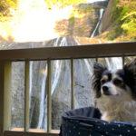 袋田の滝 犬とお出かけ