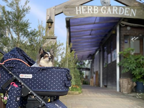 九十九里ハーブガーデン 犬とお出かけ