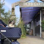 【千葉・犬とお出かけ】九十九里ハーブガーデンへ愛犬とゆるキャンしたい