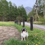 【日光・犬連れ】中禅寺湖~竜頭の滝と戦場ヶ原でまったり散策