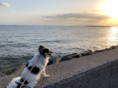 稲毛海浜公園 犬と散歩