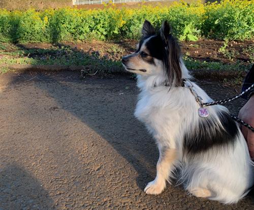 犬の行動 犬が飼い主に背中を向けてくるのは信頼の証 愛犬モコ