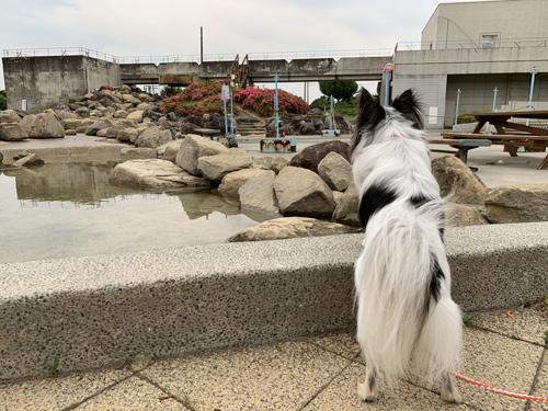 親水公園 水遊び