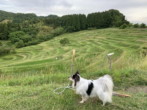 千葉の棚田「大山千枚田」へ犬とお出かけ