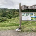 【東京から一番近い千葉の棚田】鴨川市の大山千枚田で犬と散歩