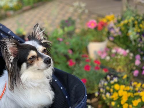 犬の熱中症対策と予防