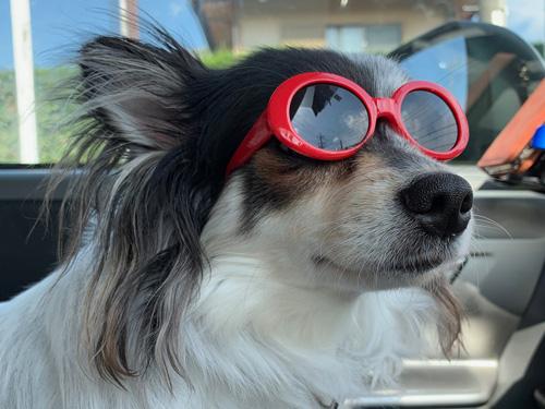 犬の熱中症対策:車内