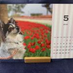 【ワンコイン】愛犬の写真入りオリジナル卓上カレンダーを頼んでみた