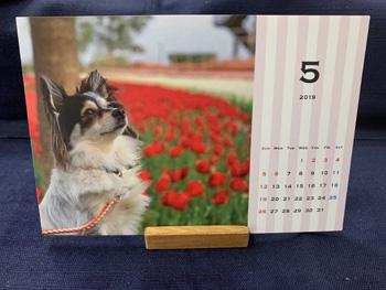 愛犬の写真入りオリジナル卓上カレンダー
