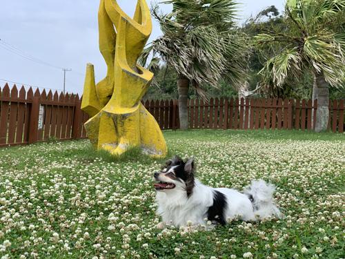 中型犬・小型犬用ドッグラン